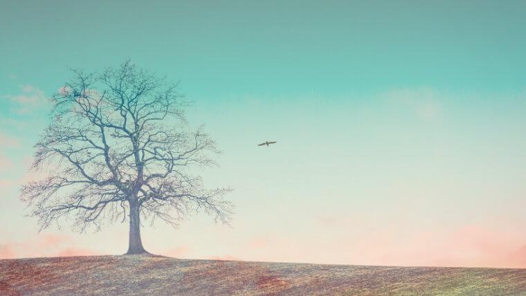 空と木を合成したアイキャッチ
